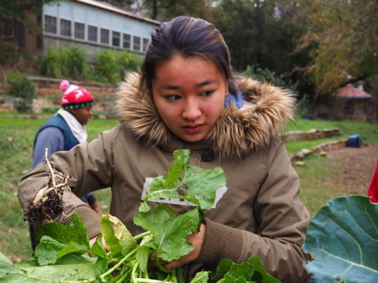 FANTASTIC FARMER: Kaya Azasu (19′) cuts up vegetables that had just been picked at the Urban Roots farm. The Urban Roots growing season has finished, but there are still slots open to join the spring and summer season. Go to http://urbanrootsatx.org/ for more info