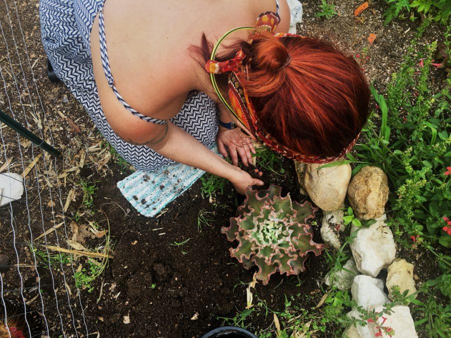 Kirsten Pacotti, Planting, 2018