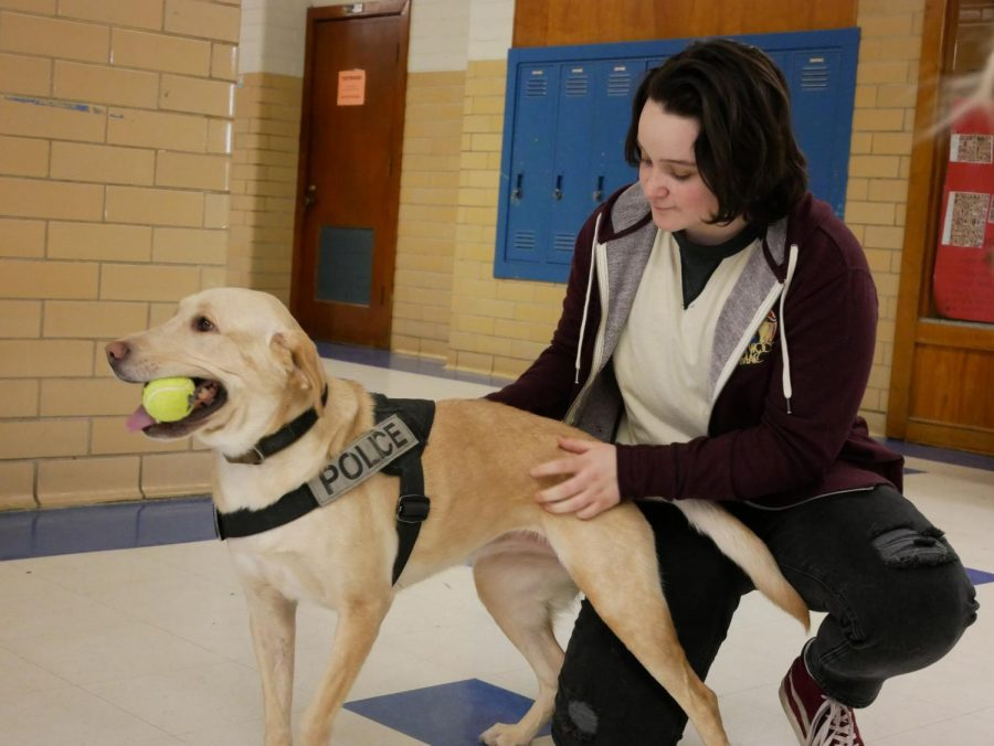 K_9 PLAY TIME: Senior Sutton Ballard and Luca, an AISD drug dog, play a quick game of fetch in the main hallway. Luca, AISD's sole drug dog, arrived at McCallum today along with her partner Officer Seagrave. Luca, whose training cost AISD $10,000, was excited to show off her obedience and tennis ball-catching skills for a crowd of students during sixth period before leaving to investigate the campus.