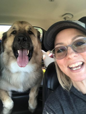 "ON HIS WAY HOME: After picking him up from the kennel, Folger drove Gus and all of his belongings to his new home with McGahon. ""He's in Austin with someone who I have a lot of love and respect for,"" she said. ""[This] means I can see him whenever I want.""  Photo courtesy of Folger."