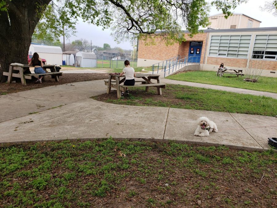 The three picnic tables formed a perfect socially distant triangle for the UIL journalism meet held on the Mac Campus. Marty the dog provides moral support while the copy editing competitors struggle with the state abbreviations their advisers never taught them.