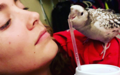 Junior Ava Phillips looks to her bird Leviathan (Levi for short), as he bites the straw of her drink. While she may be the one being perched on in this photo, Levi serves as support and company to Phillips  as she spends hours on her animations.